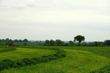 Gras-Häckseln-3