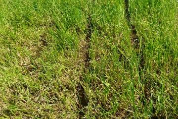 Wirkung Schleppschuh auf Grünland